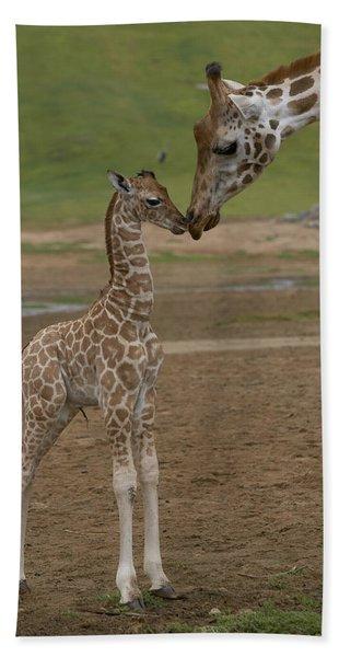 Rothschild Giraffe Giraffa Beach Towel
