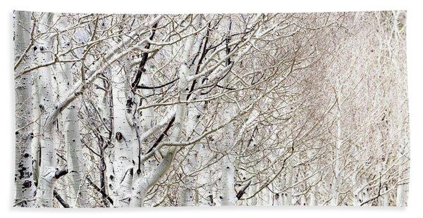 Row Of White Birch Trees Beach Towel