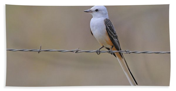 Scissor-tailed Flycatcher Beach Towel