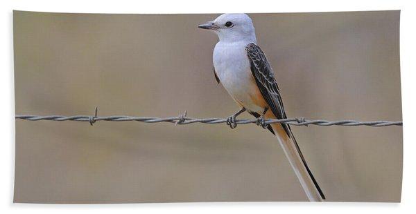 Scissor-tailed Flycatcher Beach Sheet