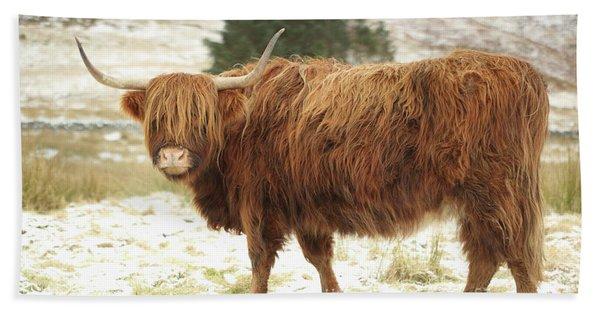 Scottish Red Highland Cow In Winter Beach Sheet