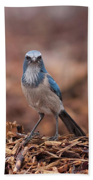 Scrub Jay On Chop Beach Towel