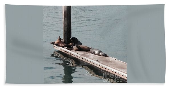 Seals At Oceanside Beach Towel