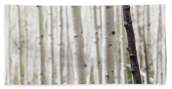 Single Black Birch Tree Trunk Beach Towel