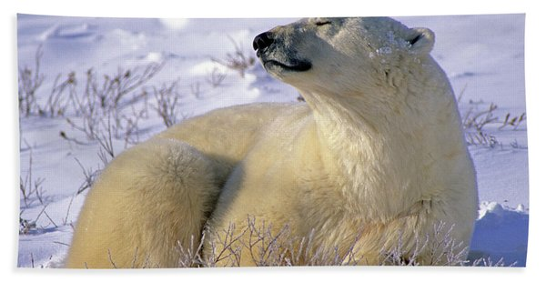 Sleepy Polar Bear Beach Towel