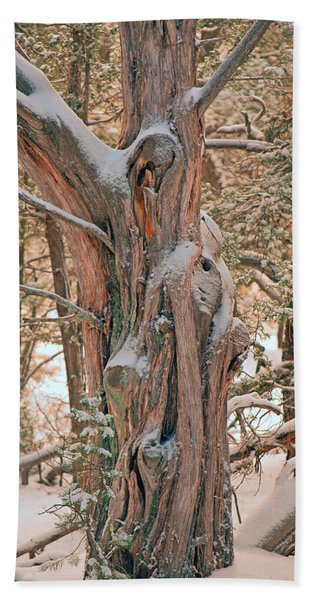 Snowy Dead Tree Beach Towel