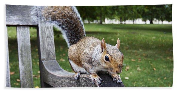 Squirrel Bench Beach Towel