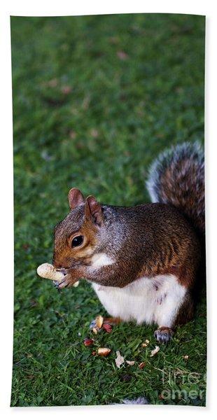 Squirrel Eating Beach Sheet