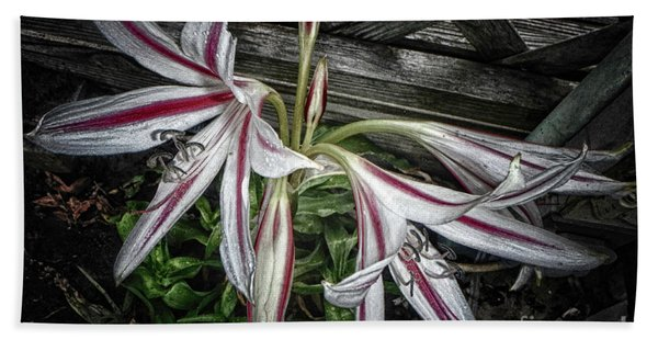 Striped Lilies Beach Towel