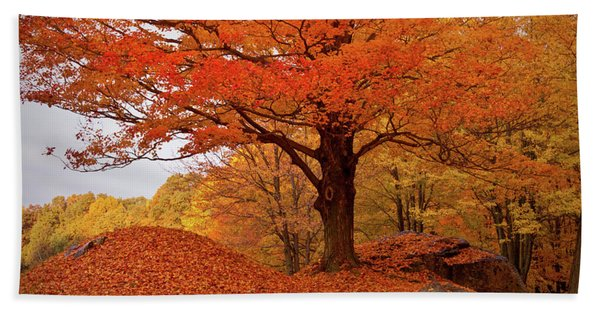 Beach Towel featuring the photograph Sturdy Maple In Autumn Orange by Jeff Folger