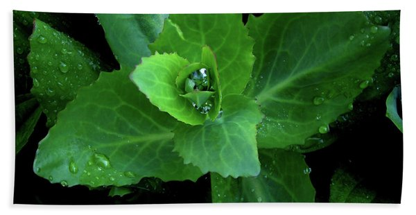 Succulent After The Rain  Beach Towel