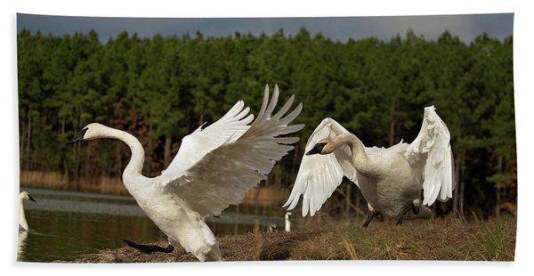 Swan Fight Beach Towel