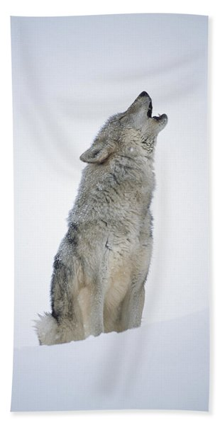 Timber Wolf Portrait Howling In Snow Beach Towel