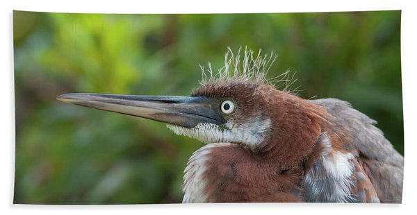 Tricolored Heron - Bad Hair Day Beach Towel