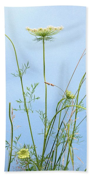 Tuft Of Queen Anne's Lace Beach Towel