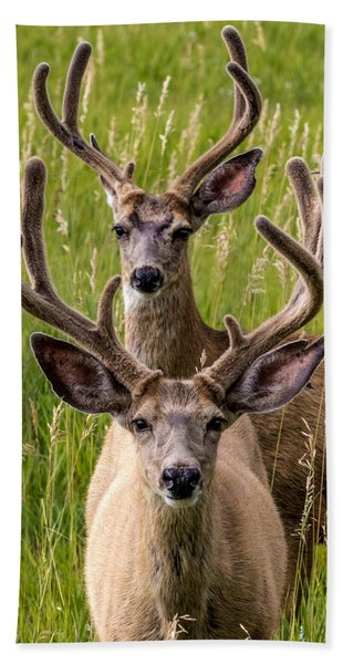 Velvet Bucks Beach Towel