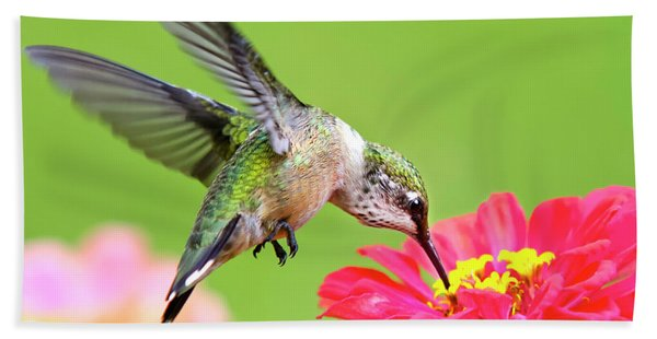 Waiting In The Wings Hummingbird Square Beach Towel