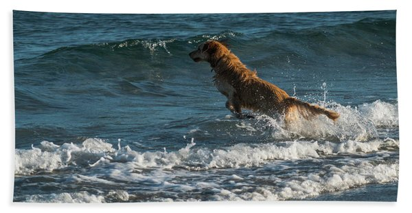 Water Dog Delray Beach Florida Beach Towel