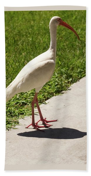 White Ibis Walking Down The Street Beach Towel