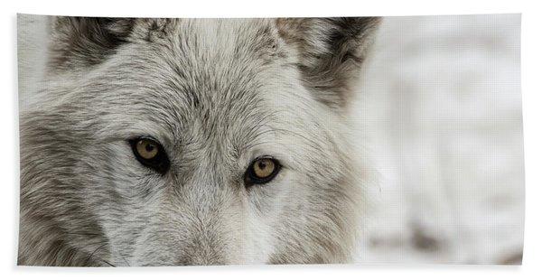 White Wolf II Beach Towel