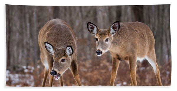 Winter White Tail Deer Beach Towel