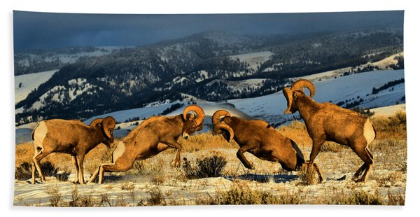 Wyoming Bighorn Brawl Beach Towel