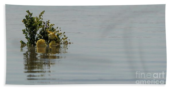 Yellow Roses Emerging From The Sea Beach Towel