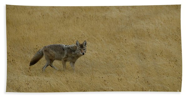 Yellowstone Coyote Beach Sheet