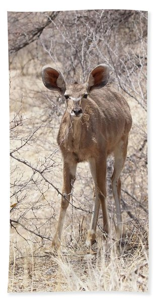 Young Kudu Beach Towel