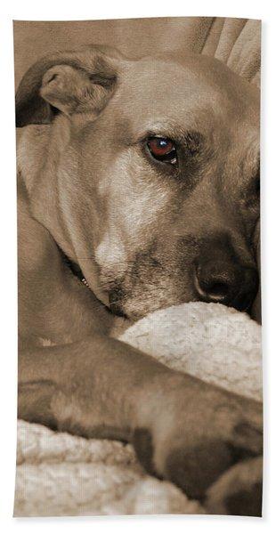 Boxer Varon Portrait 2 Beach Sheet