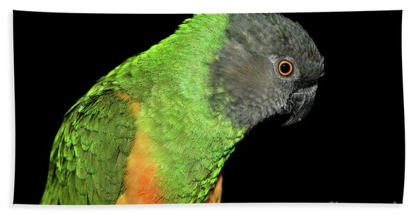 Senegal Parrot Beach Towel