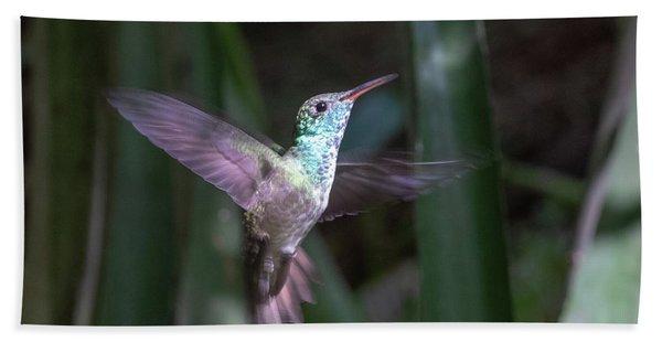 Versicolored Emerald Hummingbird Hovers Beach Towel