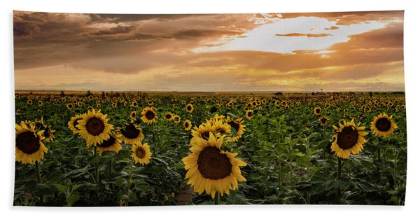 A Field Of Sunflowers At Sunset Beach Towel