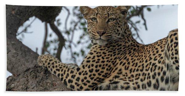 A Leopard Gazes From A Tree Beach Towel