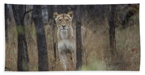 A Lioness In The Trees Beach Towel