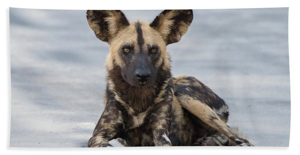 African Wild Dog Resting On A Road Beach Towel