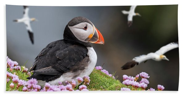 Atlantic Puffin And Soaring Gannets Beach Towel