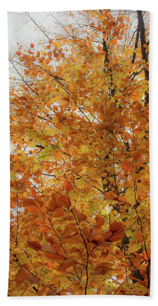 Autumn Explosion 1 Beach Towel