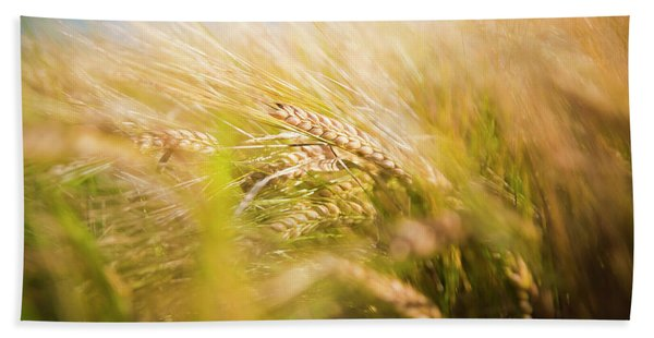 Background Of Ears Of Wheat In A Sunny Field. Beach Towel