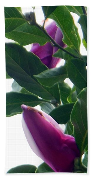 Blossoming Magnolias Beach Towel