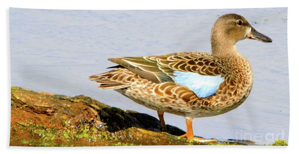 Blue-winged Teal Female Duck Beach Towel