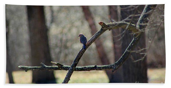 Bluebird, Bluebird, Sing To Me Beach Sheet