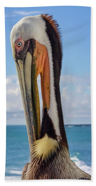 Brown Pelican Portrait Beach Towel