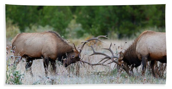Bull Elk Battle Rocky Mountain National Park Beach Towel