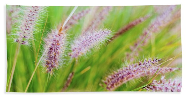 Colorful Flowers In Purple Spikes, Purple Fountain Grass, Close- Beach Towel