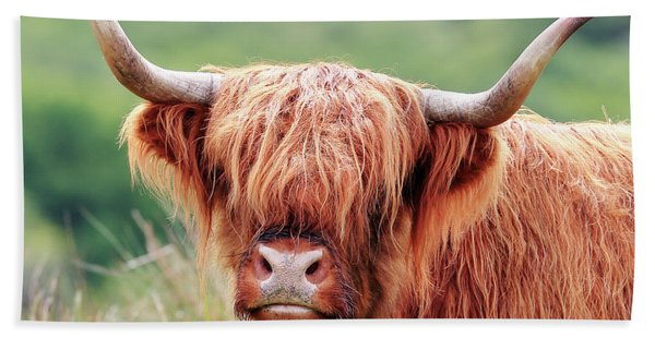 Face-to-face With A Highland Cow Beach Sheet