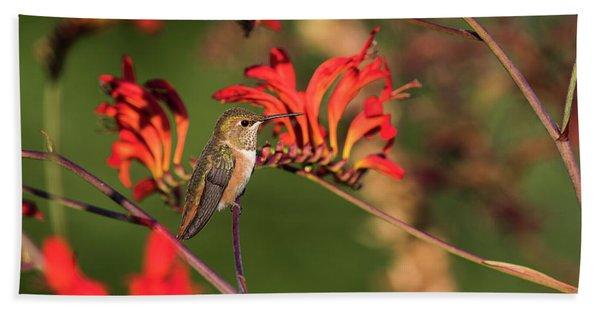 Female Rufous Hummingbird At Rest Beach Towel