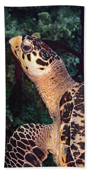 Hawksbill Profile Beach Towel
