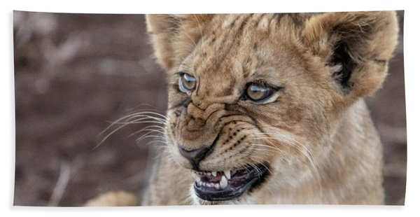 Irritated Lion Cub Beach Towel