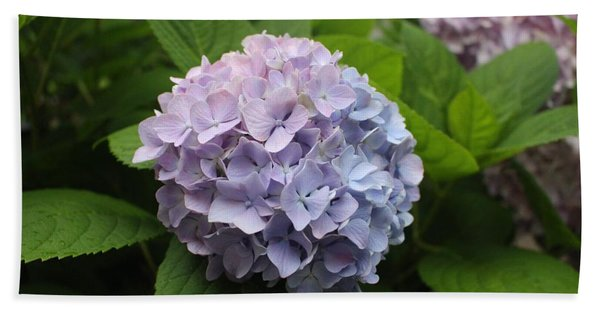 Lavender Hydrangea, Cape May Beach Sheet